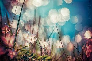 in_light_by_oer_wout-d5uidjl