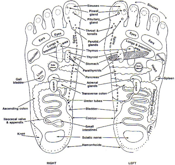 feet and organs - SaS
